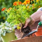 a woman planting flowers to make a deck more inviting